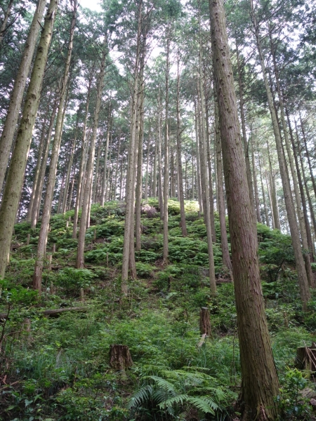 hiking2014009